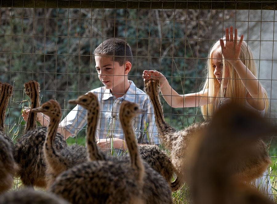 Les enfants et les autruchons