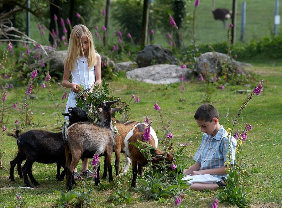 Les enfants adorent les chèvres du parc